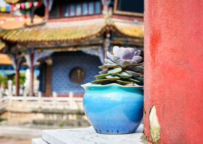 Flower in a pot in the Yuantong Temple, China.