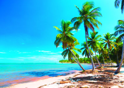 Palm trees bent over the ocean, Dominican Republic